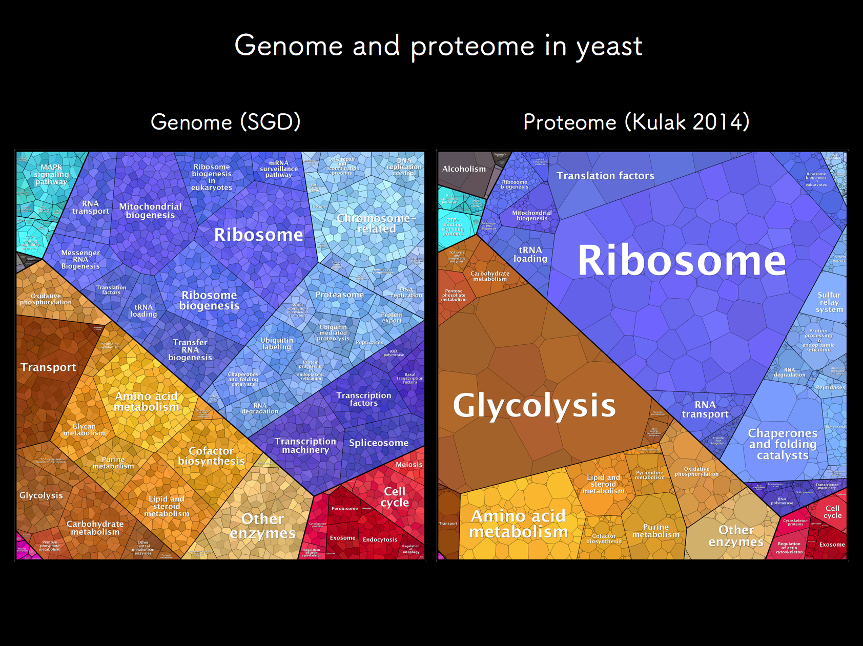 Yeast genome and proteome