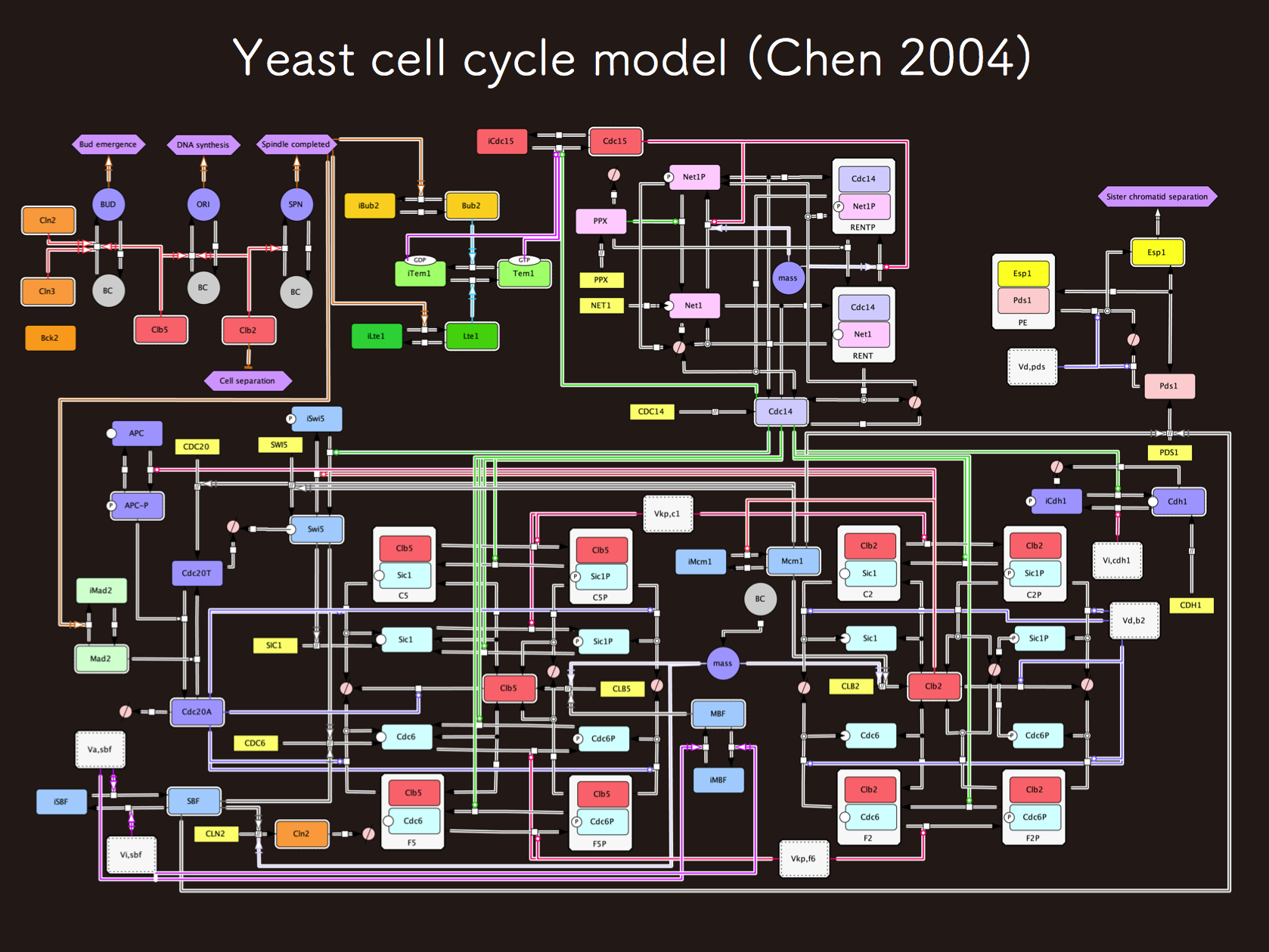 Budding yeast cell cycle model